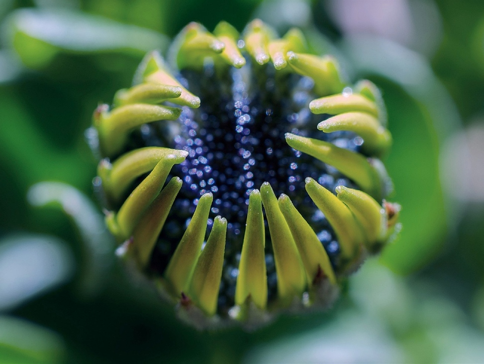 Bud's flower